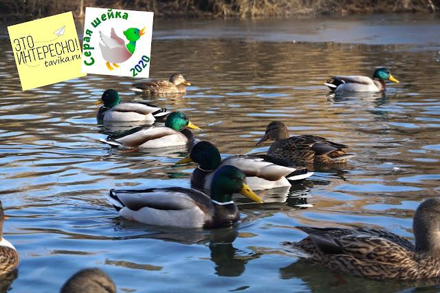 зимний учет птиц в Гагаринском парке, Симферополь