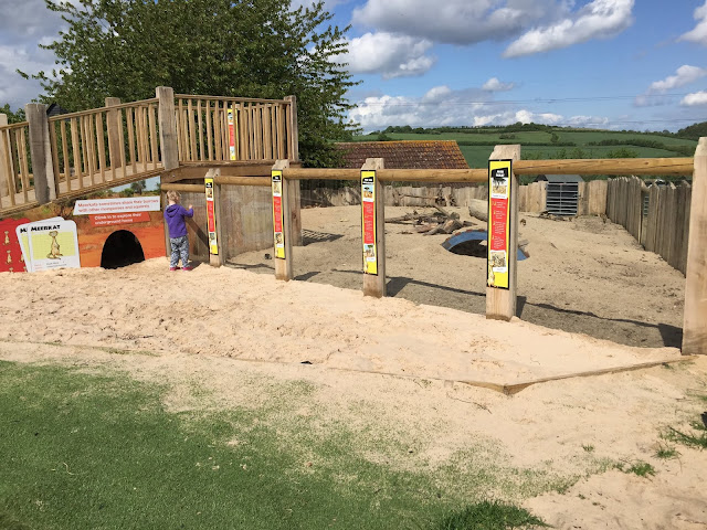 View into the meerkats across sand at Lee Valley Park Farms
