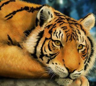 Tigre pensando en el calentamiento global