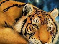 Fondos de Escritorio de Leones, Leopardos y Tigres