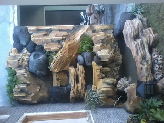 jual pohon ararea | kolam minimalis | kolam koi | relief