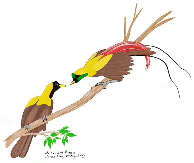 Digital drawing of Red Bird of Paradise