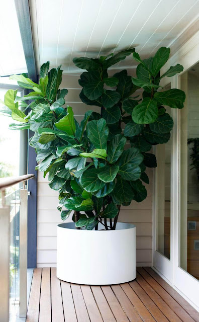 House Plant Indoor