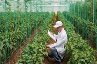 وظائف هندسة زراعية السودان