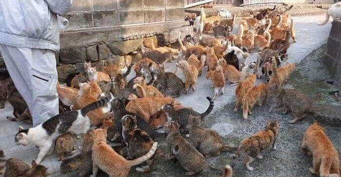 Island of Cats