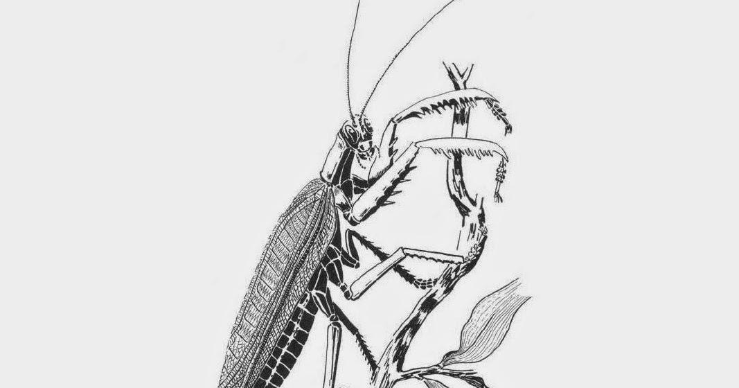 Variety of Life: Titanopterida