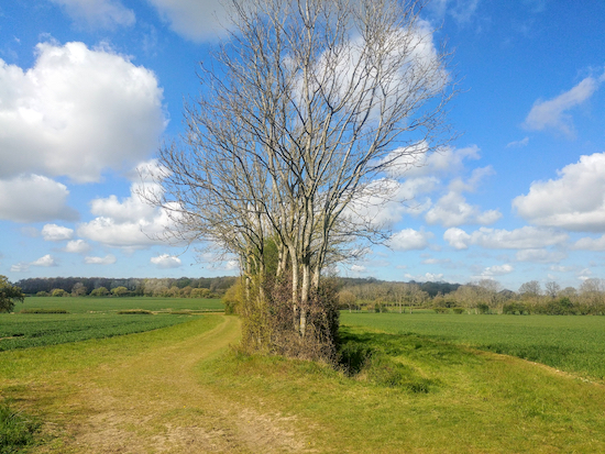 The bridleway goes to the left of the hedgerow and heads WSW