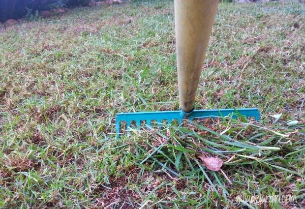 Las claves para recuperar un c sped estropeado guia de - Arreglar jardin abandonado ...
