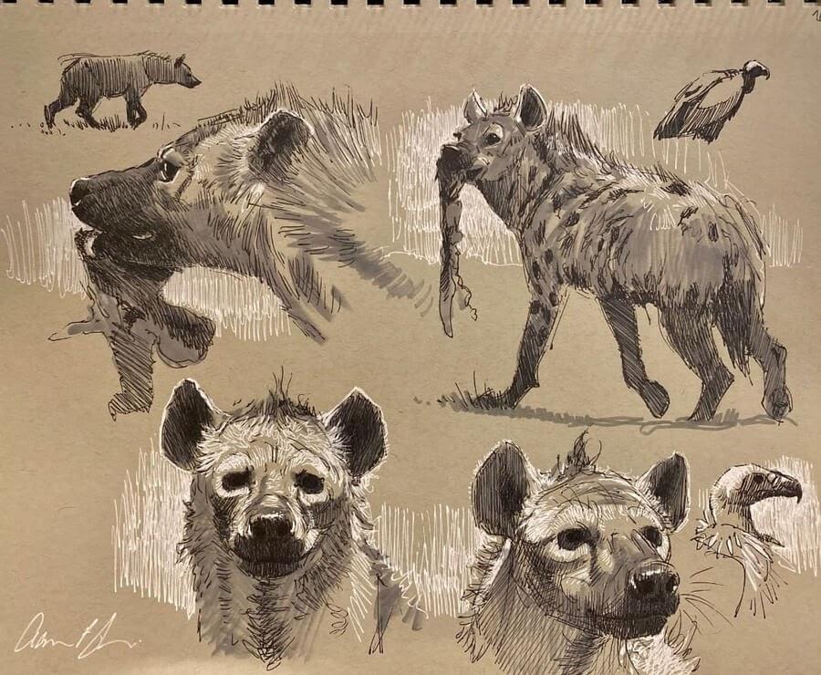05-Hyena-Drawing-study-Aaron-Blaise-www-designstack-co