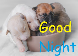 cute baby dog good night gif images