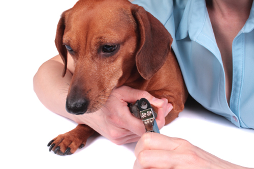 how to cut dogs nails without cutting quick