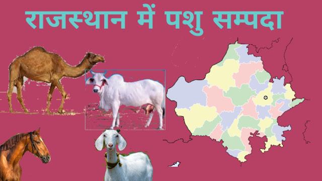 राजस्थान में पशु धन
