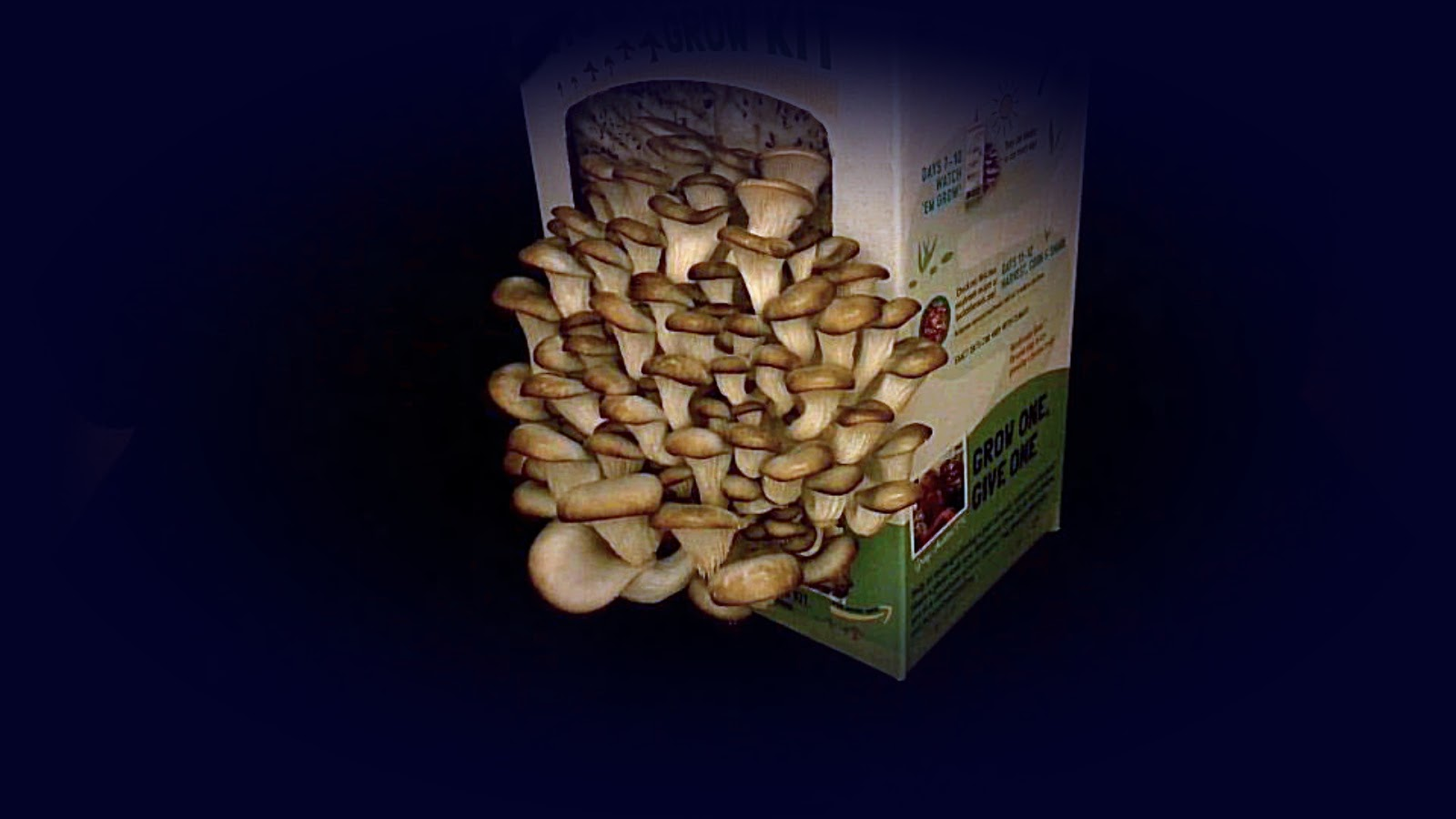 Random Bits: Growing Oyster Mushrooms First Time