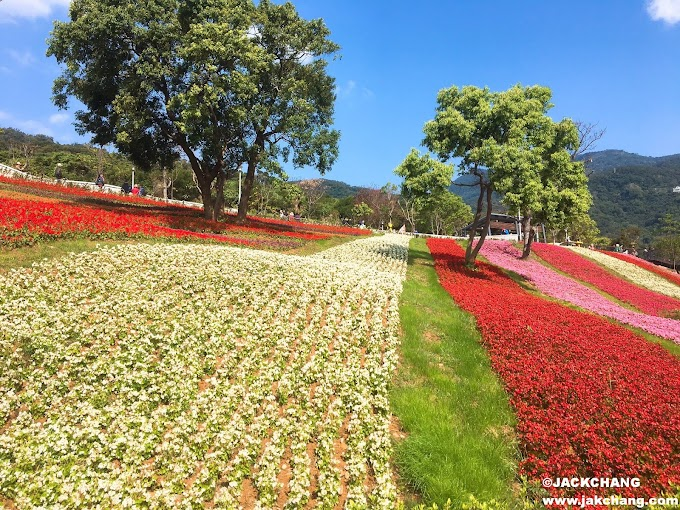 Beitou Attractions | Ki-Pataw Shan-Tseng-Chi Park-Taiwan version of Furano Wildflower Sea, flowering period until the end of February