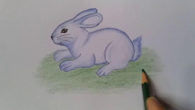 como dibujar una liebre