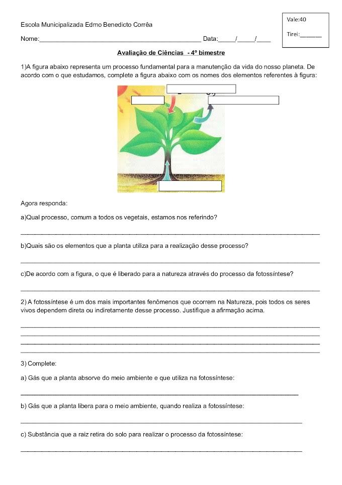 PROVA DE CIÊNCIAS ALIMENTAÇÃO E RESPIRAÇÃO DAS PLANTAS.