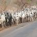 Northern groups warn Southwest on Fulani treatment