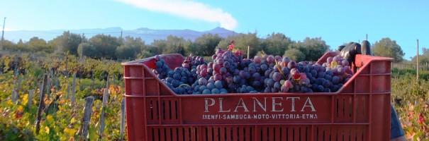 Vinícola Planeta Winery em Taormina