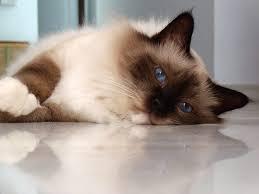 5 Cách chăm sóc cho một chú mèo già