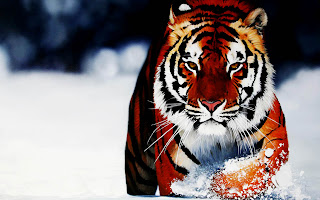 Tiger in Snow Winter Realisctic HD Wallpaper