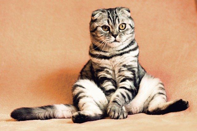 Kucing Kekenyangan