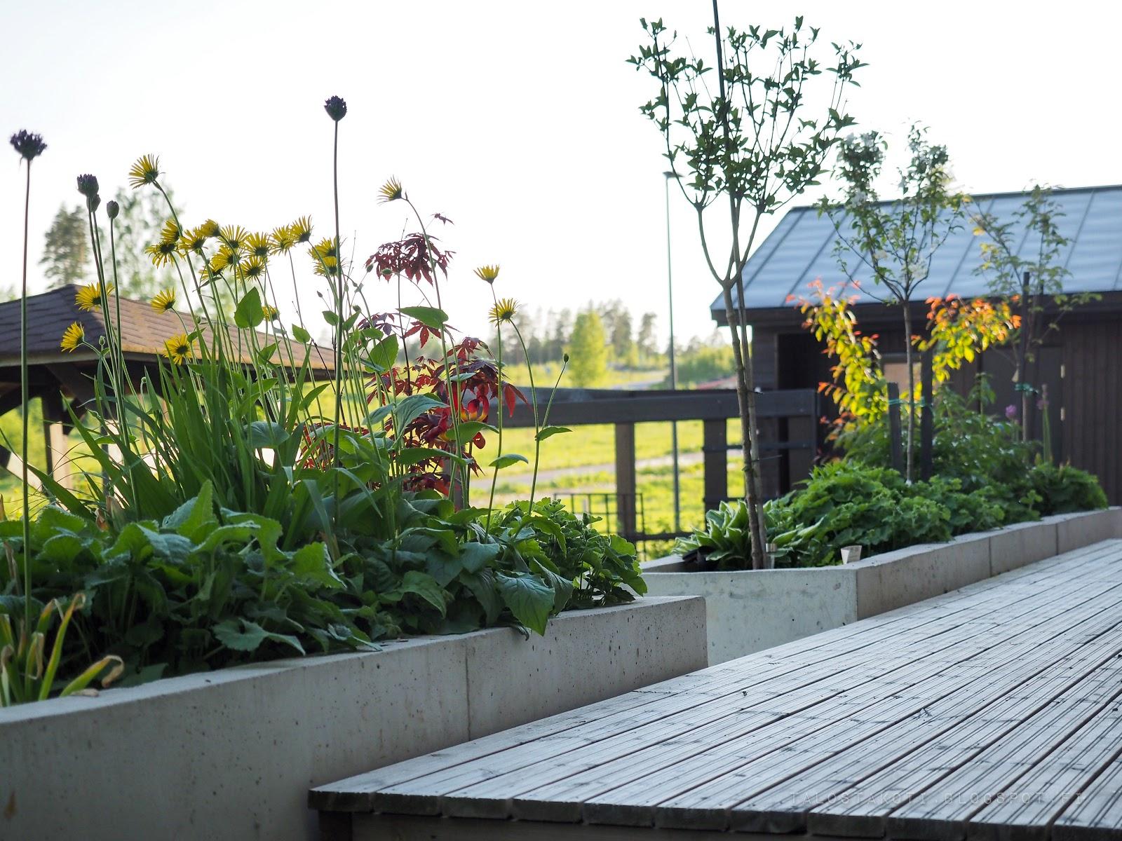 terassi, betonimuuri, kukkia