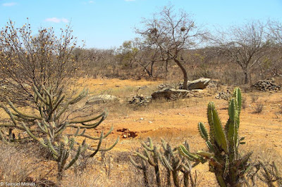 Resultado de imagem para vegetação de lajes do cabugi