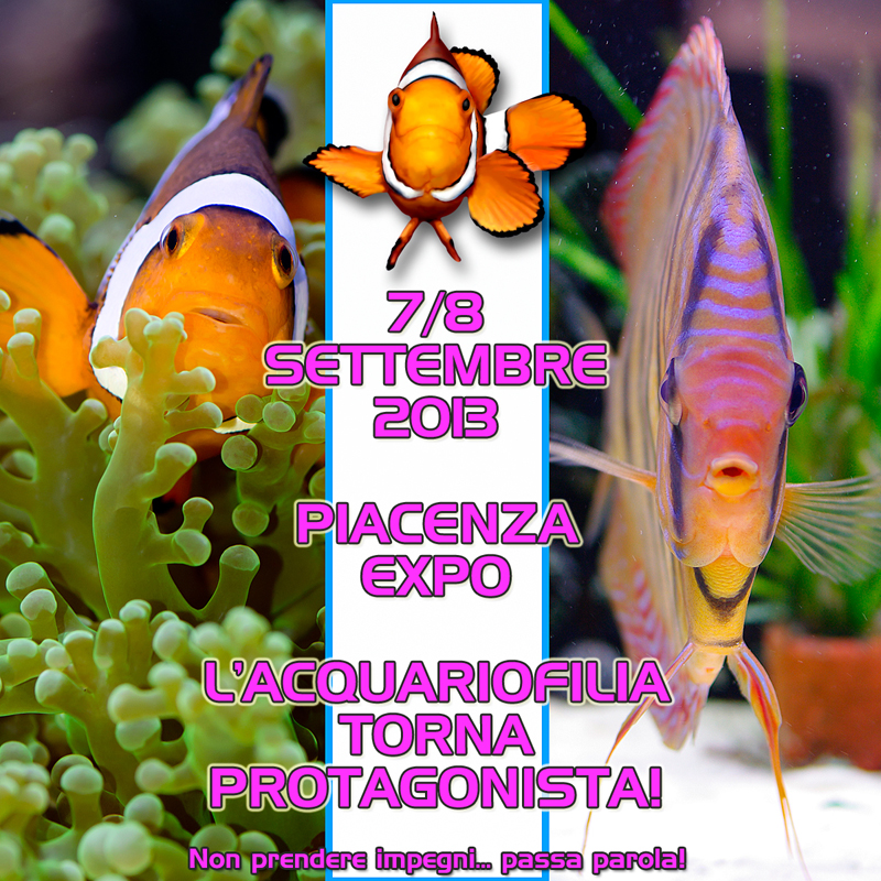 Giordy's Reef: PIACENZA 7/8 SETTEMBRE