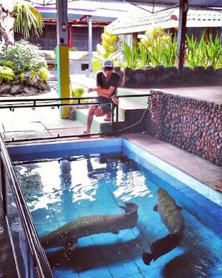 Ikan Arapaima Fish Garden Blitar