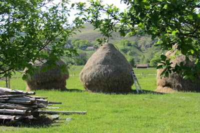 Servië, hooischelven vlakbij camping Viljamovka