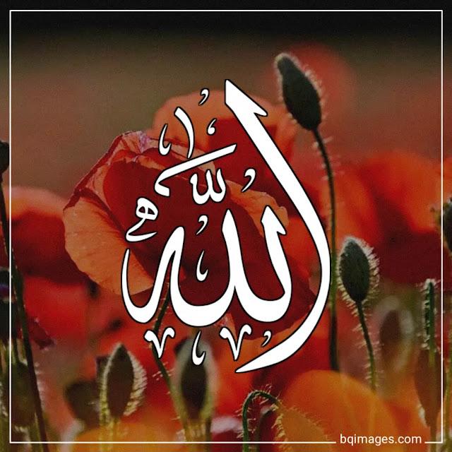 download islamic dp for whatsapp
