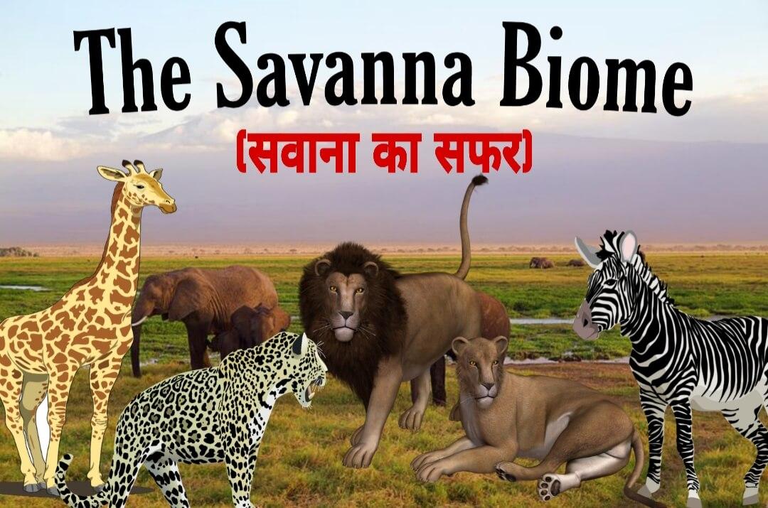 सवाना के मैदान के बारे में रोचक तथ्य - Interesting facts about the African savanna in Hindi