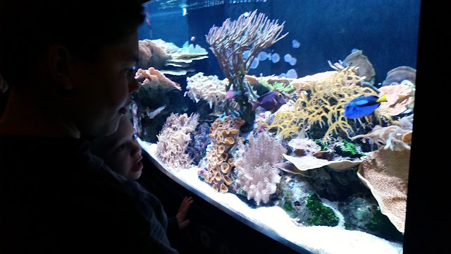 Siesta Key 2016 --Part Two:  MOTE Marine Laboratory and Aquarium --How Did I Get Here? My Amazing Genealogy Journey