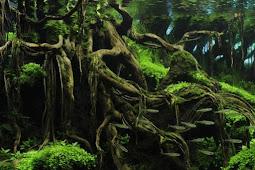 10 Jenis Tanaman Aquascape Untuk Pemula