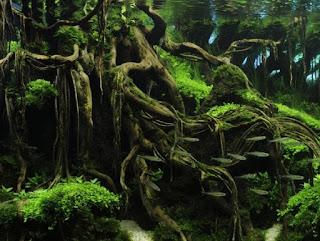 rekomendasi tanaman hias aquascape