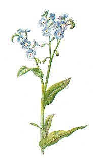https://1.bp.blogspot.com/-LTnyA30MFUk/Wgi6Or-dMxI/AAAAAAAAhkM/mzcVMK4jvkUAfGH4RbgaEIDdF3aUmFjvwCLcBGAs/s320/flower-artwork-clipart-forget-me-not-wildflower.jpg