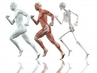 skeleton in Spanish