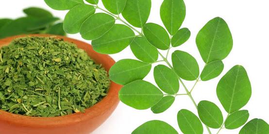 نبتة مورينجا