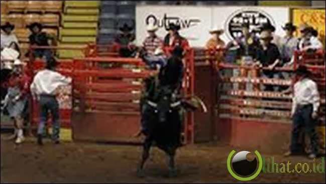 Bull Riding (Menunggang Banteng)