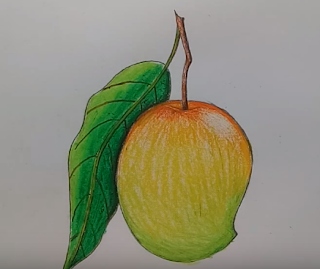 Mango sketch