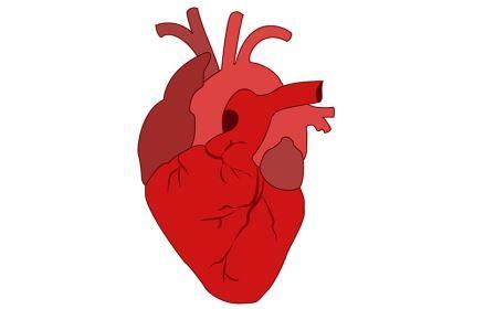 Penyakit Jantung , Gejala , Penyebab , Pengobatan Penyakit Jantung