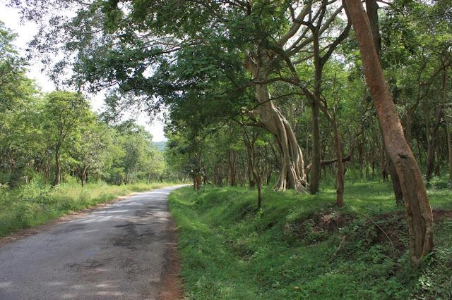 The Yellandur - BR hills road amidst the forests of BRT tiger reserve, Karnataka, India