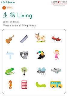 認識生物和非生物 Learning Living and Nonliving 生命週期 Life Cycle 認識胎生和卵生 Learning Viviparous and Oviparous