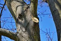 cięcie gałęzi wysokich drzew