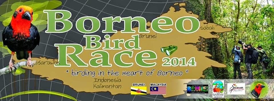 2014 Borneo Bird Race