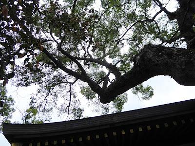 【門真市稗島】堤根神社のクスノキ