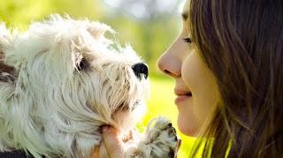 hálito de cães