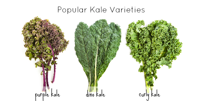 Why is kale good for me