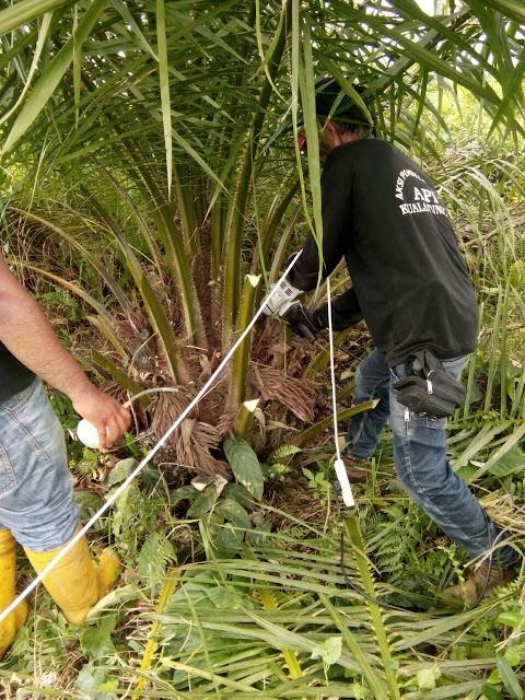 Matikan 78 Hektar Sawit, PT MAJI Coba Lenyapkan Bukti Perambahan 600 Hektar