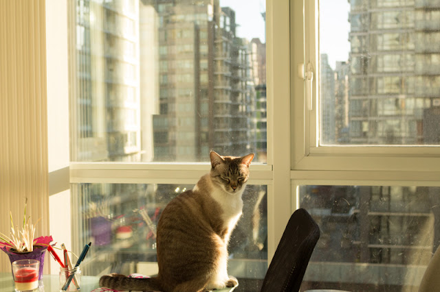 A cat enjoys the sunshine through the window & views of Vancouver
